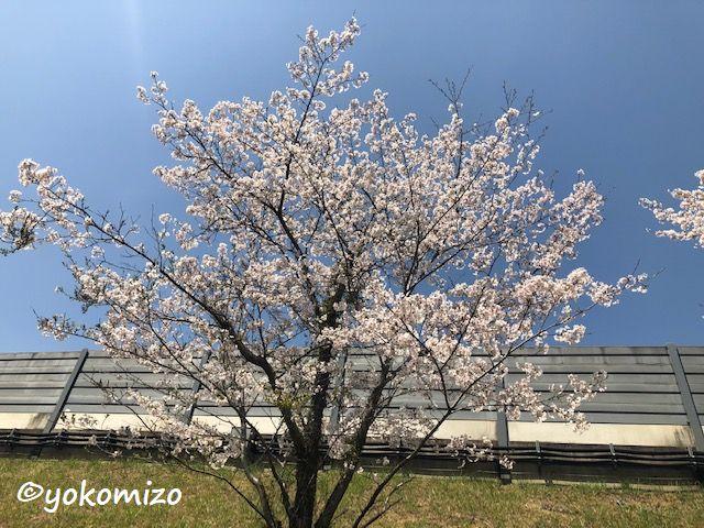 桜 有限会社横溝工務店